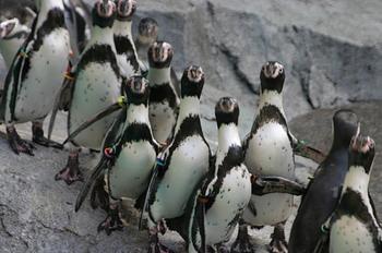 Avoid SEO Penguin Troubles resized 600