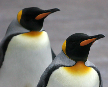 SEO Strategy and Penguin resized 600